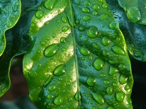 leaf-rain-coffee-water-38435-medium