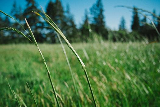nature-sunny-field-summer-medium