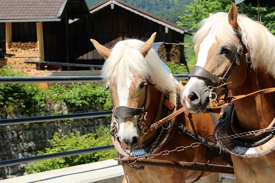 horses-1519536_960_720